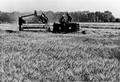 Using a harvester to harvest wheat in Daxing county 大兴县, Beijing